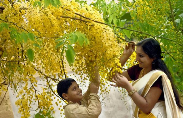 4. httpwww.thehindu.comnewsnationalkeralakerala-celebrates-vishu-with-tradition-fervourarticle397736.ece
